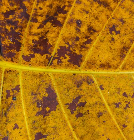 leaf texture for backgrounds photo