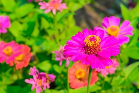Beautiful flower from bangkok (Thailand) photo