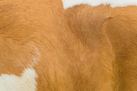 furry stuff: Animal wool texture for background