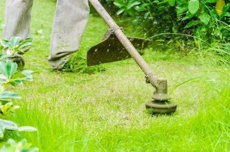 cut grass: Cutting grass