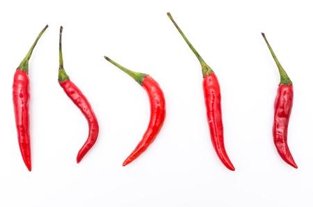 red chilli pepper plant: Chilli on white background
