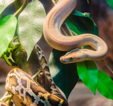 Snake photo