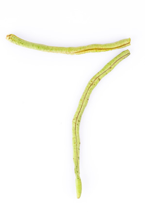 Yardlong bean alphabet number photo