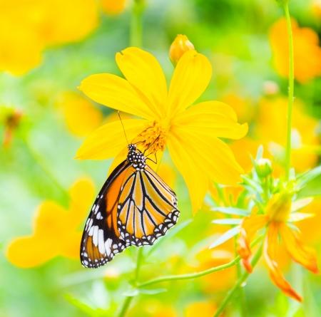Vlinder op bloem Stockfoto