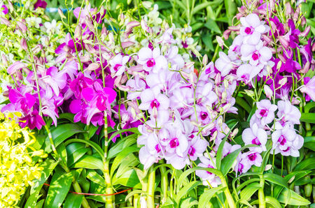 Beautiful orchid flowers in the flowers shop photo