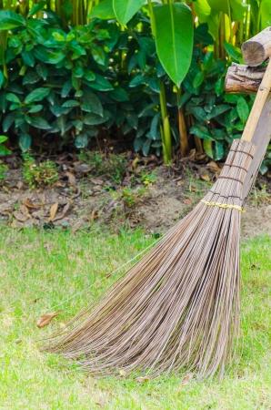 Broom in the garden photo