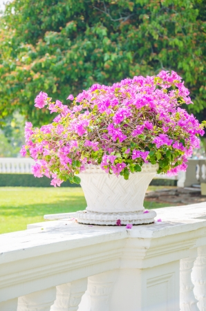 Bougainvillea flower in vase photo