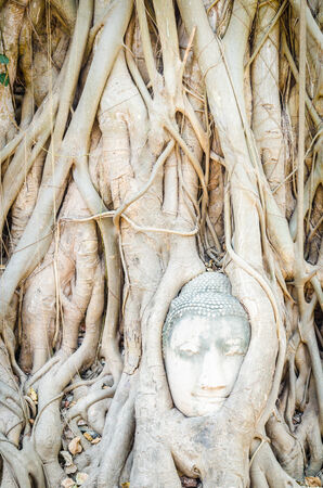 Buddha head statue under root tree in ayutthaya Thailand photo