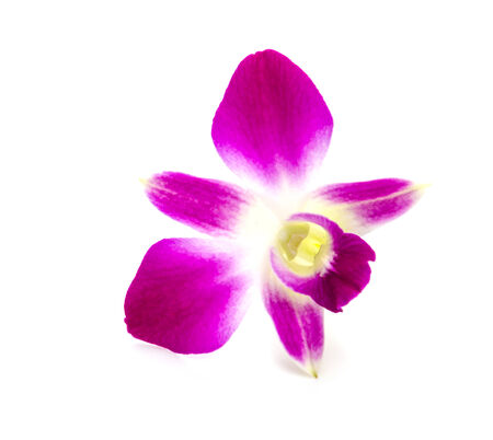Purple orchid flower isolated white background photo