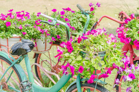 Bicycle flower photo