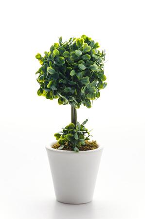 Pot plant isolated on white photo