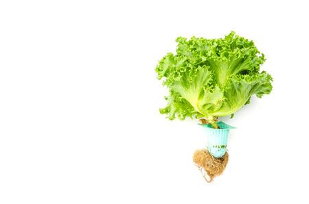 Vegetables isolated on white background photo