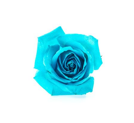 Blue rose isolated on white photo