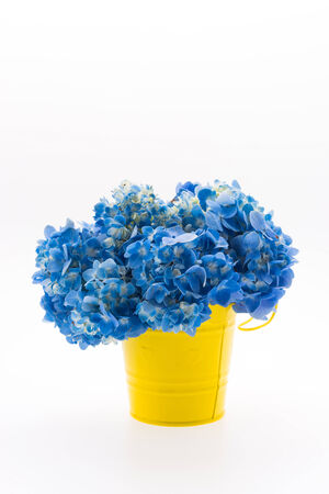 flowers bouquet: Hydrangea flower bouquet isolated Stock Photo