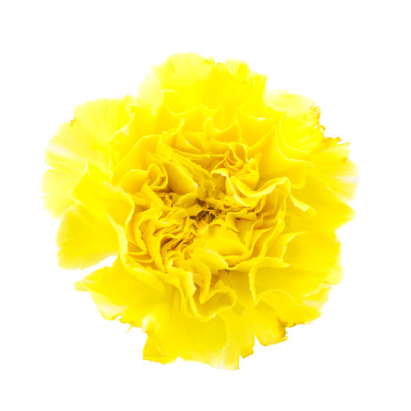 Yellow carnation flower isolated on white background stock photo stock photo yellow carnation flower isolated on white background mightylinksfo