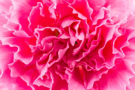 Nahaufnahme Rosa Blume Hintergrund