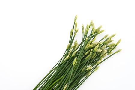 cebollin: Cebollino de ajo aislados sobre fondo blanco