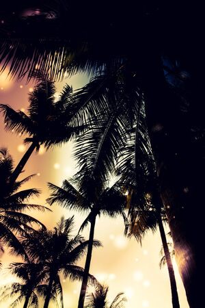 silhouette palm tree - vintage effect filter and light leak filter effect photo