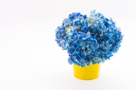 hydrangea flower: Hydrangea flower bouquet isolated Stock Photo