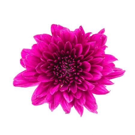 flor morada: Flor p�rpura aislado sobre fondo blanco