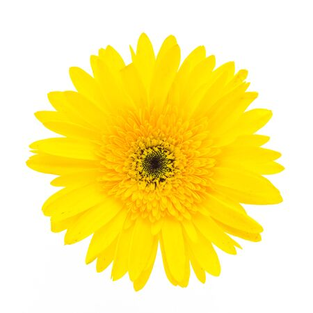 yellow gerbera isolated on: Yellow gerbera flower isolated on white background