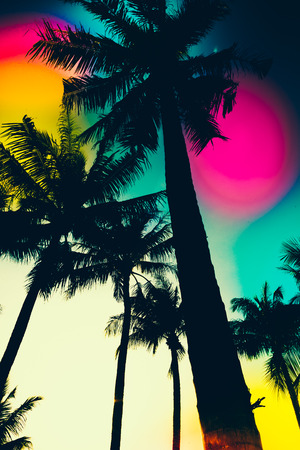 silhouette palm trees - vintage effect filter and light leak filter effect photo