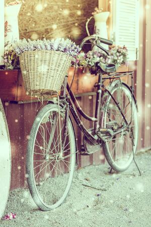 winter flower: Soft focus on winter flower bicycle - vintage and snow effect