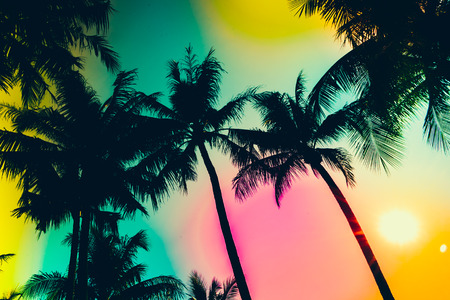 silhouette palm tree - vintage effect filter and light leak filter effect Stockfoto