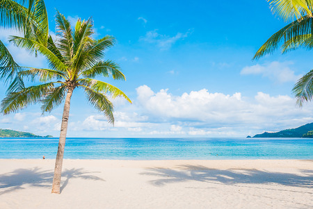sunny beach: Coconut palm tree with Beautiful Tropical beach and sea