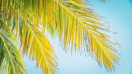 Beautiful coconut palm tree on blue sky - vintage filter photo
