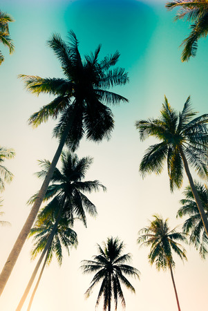 tropical sunset: Silhouette palm tree - vintage filter and light leak effect