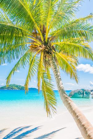 playas tropicales: Hermoso árbol de palma de coco en la playa tropical y el mar Foto de archivo