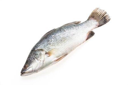 Fresh Sea bass fish isolated on white background photo