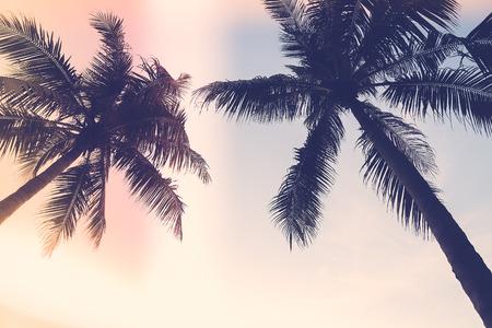 palmier: Silhouette palmier avec le soleil fus�e - effet de filtre mill�sime Banque d'images
