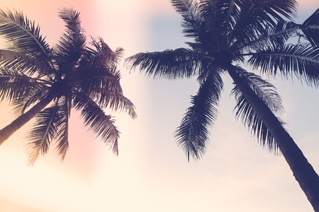 palms: Silueta de la palmera con la flama del sol - efecto de filtro de la vendimia