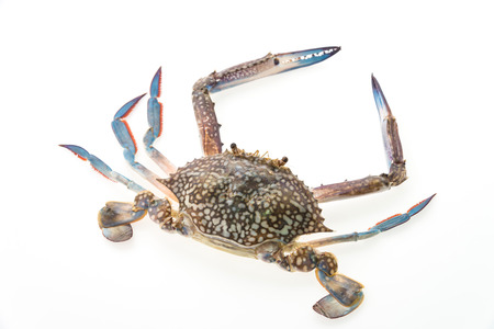 Raw crab isolated on white background photo