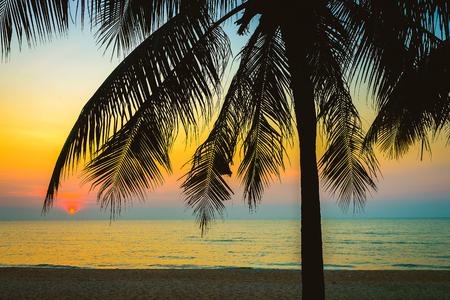 playas tropicales: Silueta de la palmera - filtro de la vendimia Foto de archivo
