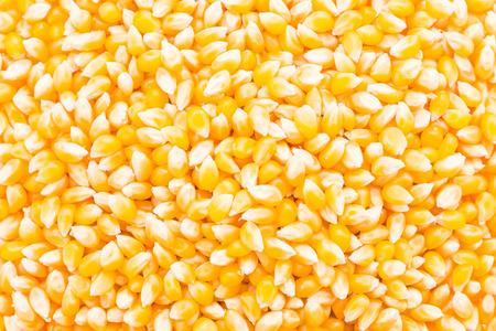 elote: Fondo del ma�z de semilla de mazorca Foto de archivo