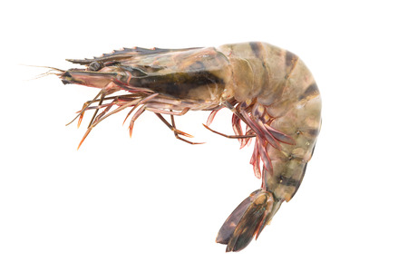 Raw Tiger prawn shrimp isolated on white background
