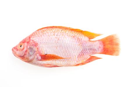 fish isolated: Raw fresh fish isolated on white background