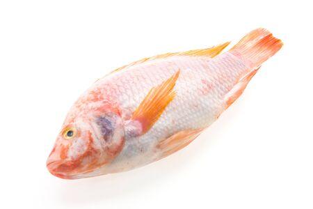 nile tilapia: Raw tilapia fresh fish isolated on white background