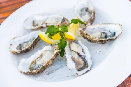 ostra: Punto de enfoque selectivo en ostras frescas c�scara con lim�n