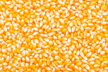 Corn cob seed background