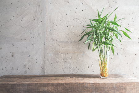 house plant: Vase plant decoration with empty room - vintage haze filter