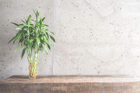 bamboo house: Vase plant decoration with empty room - vintage haze filter
