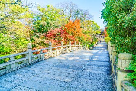 autum: Autum season with maple tree in japan Stock Photo