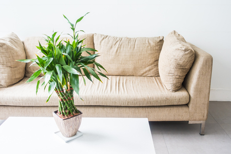living room sofa: Vase plant decoration with sofa interior of living room