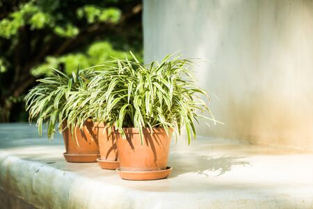 desk: Green Vase plant with outdoor patio Stock Photo