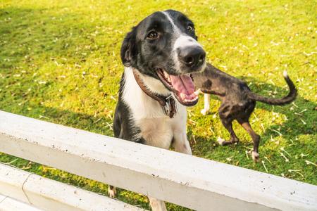 Happy dog on green field Lizenzfreie Bilder