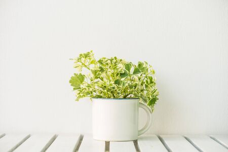 Green vase plant on table with copy space Standard-Bild